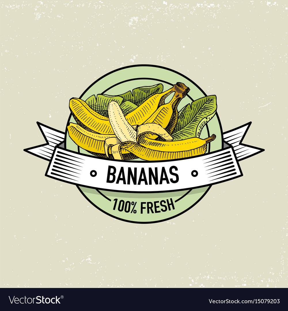Bananas vintage hand drawn fresh fruits