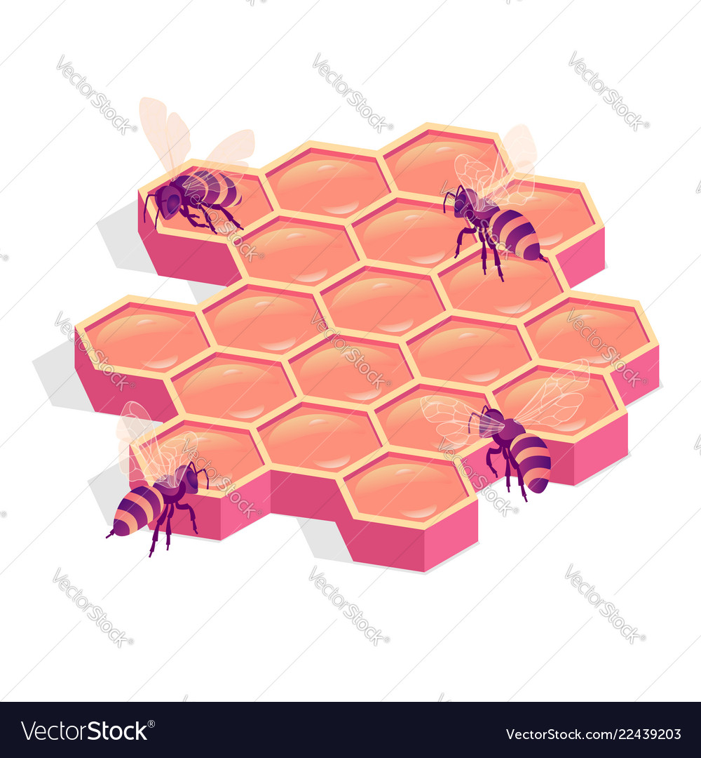 Bees on comb isolated isometric
