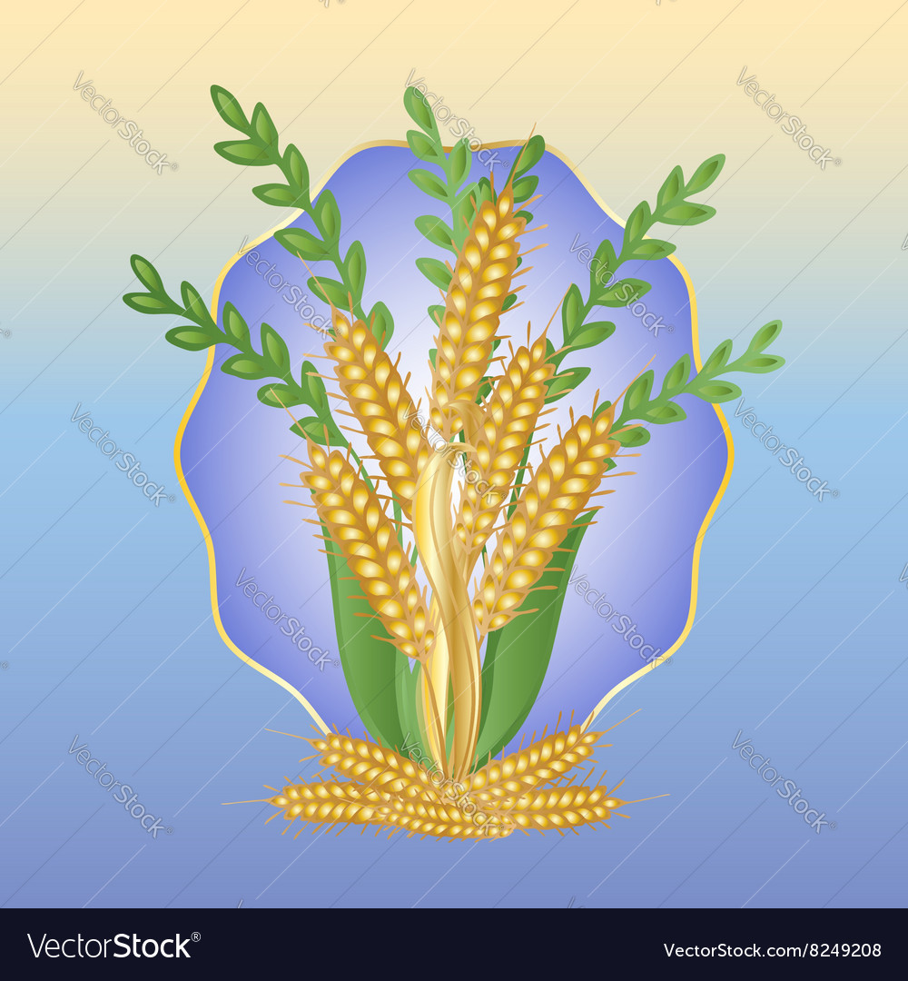 Bouquet of ears of wheat
