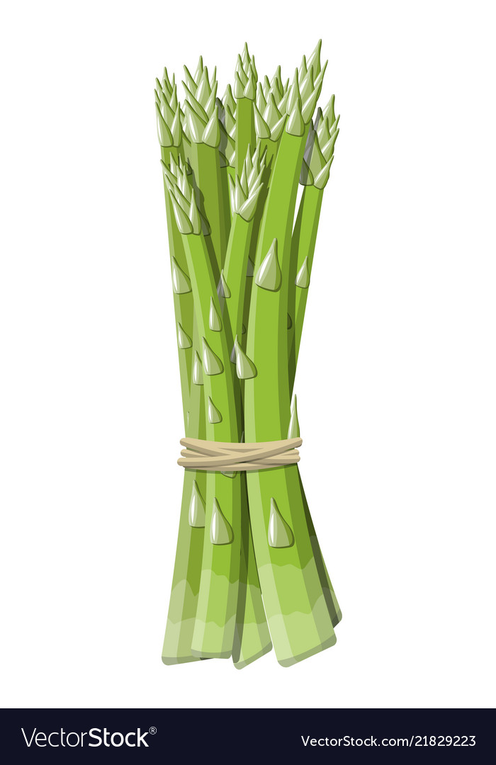 Asparagus vegetable stem isolated on white