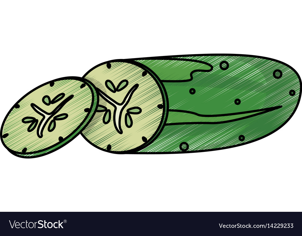 Drawing cucumber food nutrition