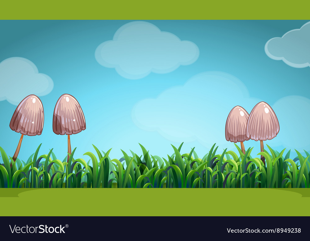 Scene with mushroom in the field vector image