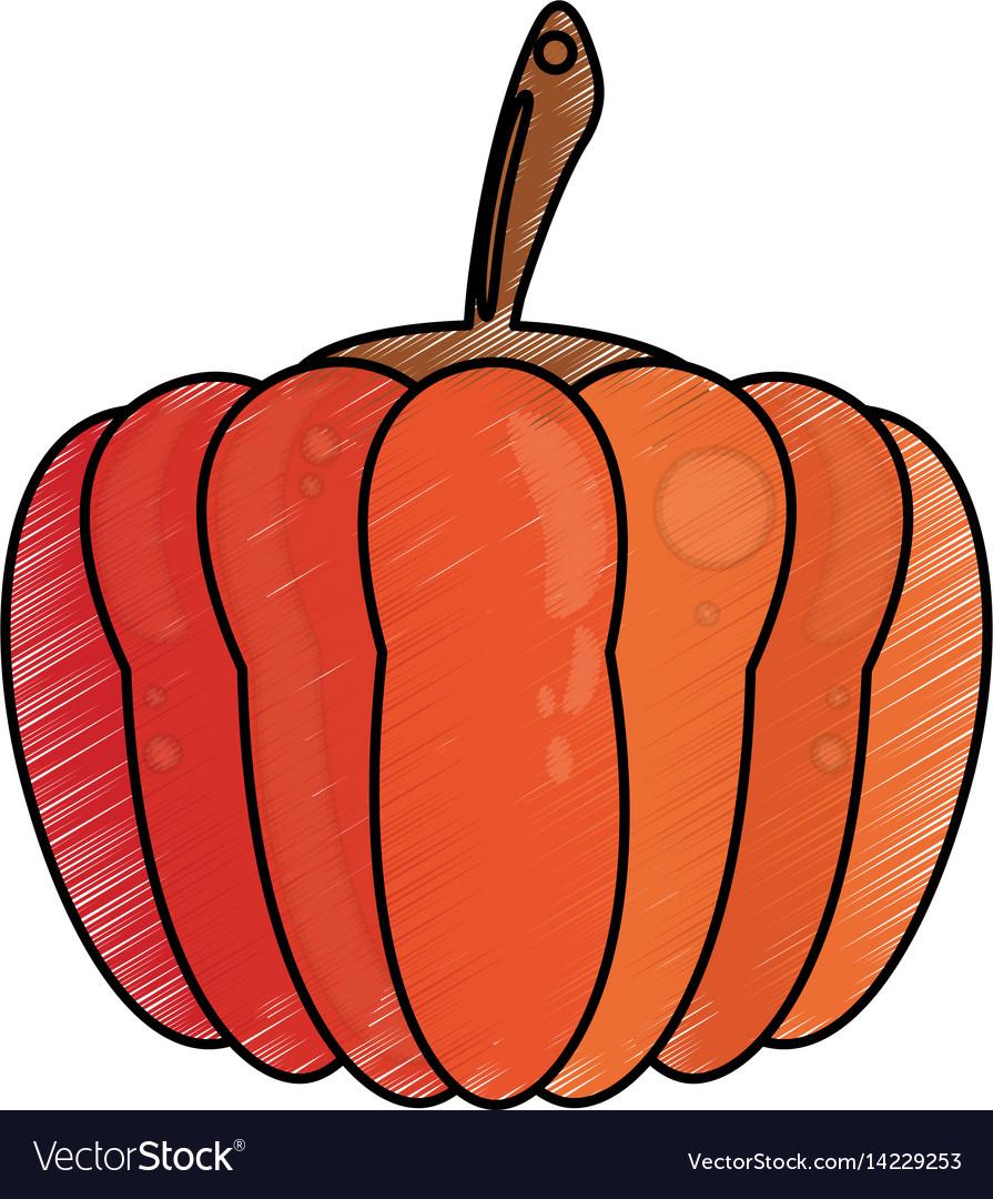 Drawing Pumpkin Food Nutrition Royalty Free Vector Image