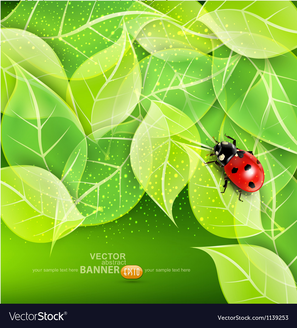 Leaves and ladybug vector image
