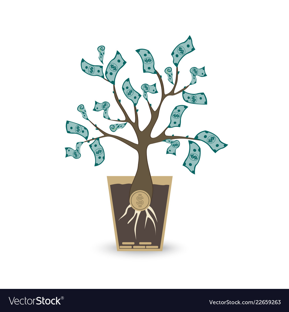 Ypung money tree isolated object on white
