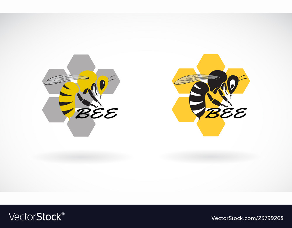 Bee and honeycomb design on white background