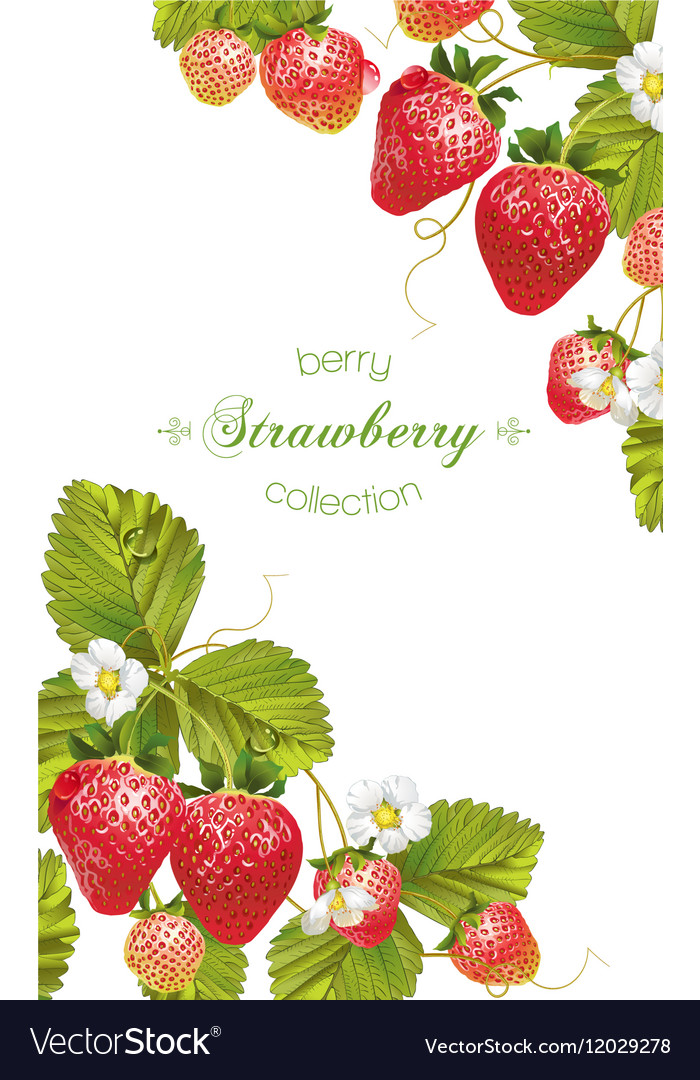 Strawberry vertical banner