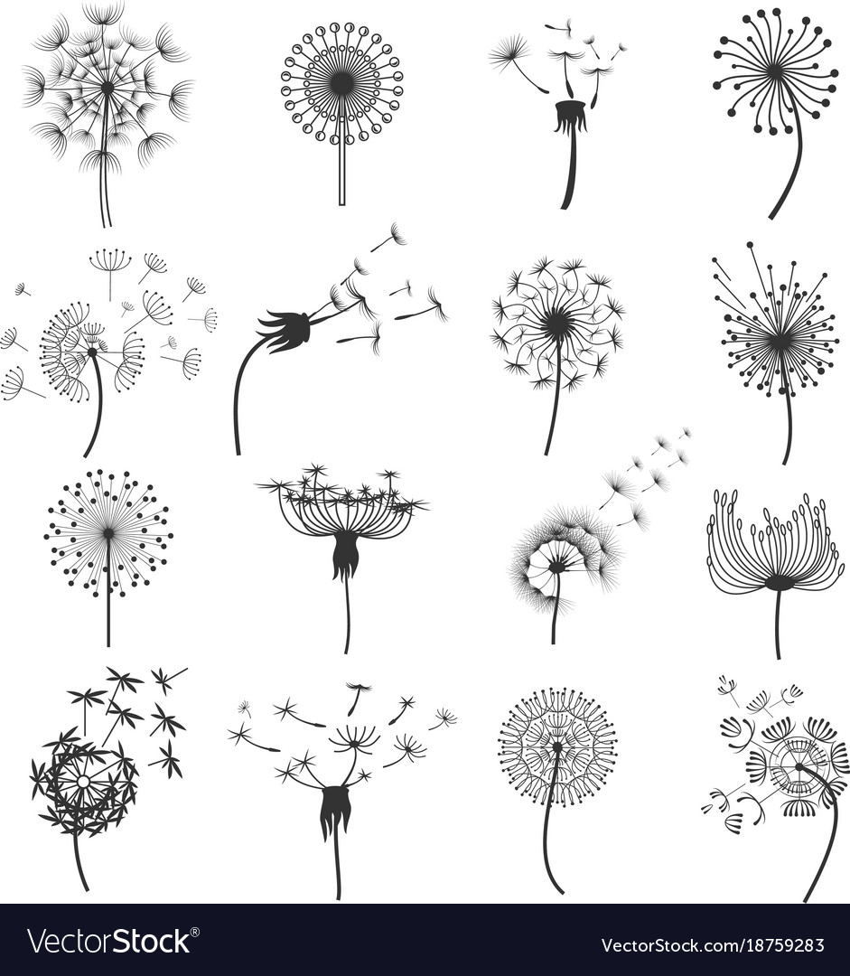 dandelion blowball in the wind set royalty free vector image