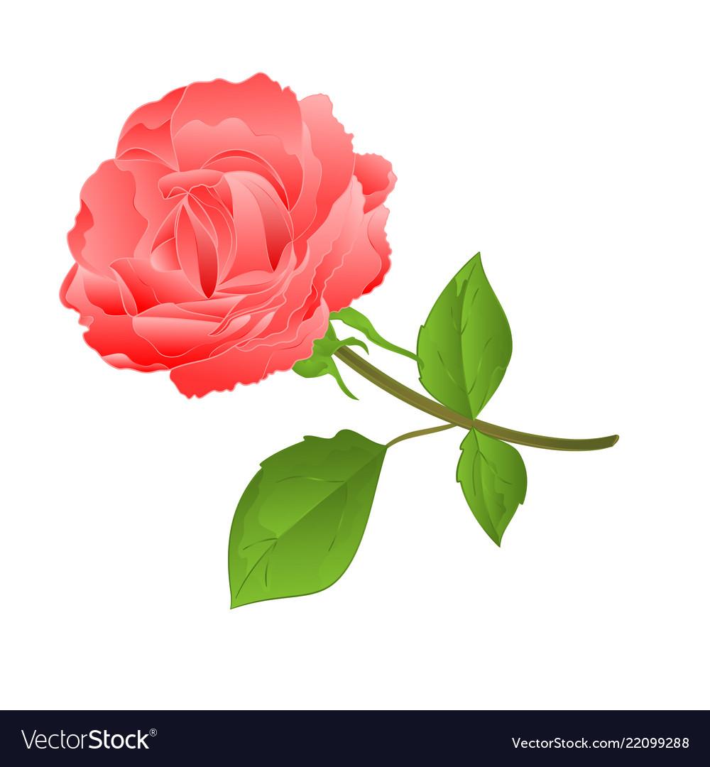 Twig pink rose and bud vintage