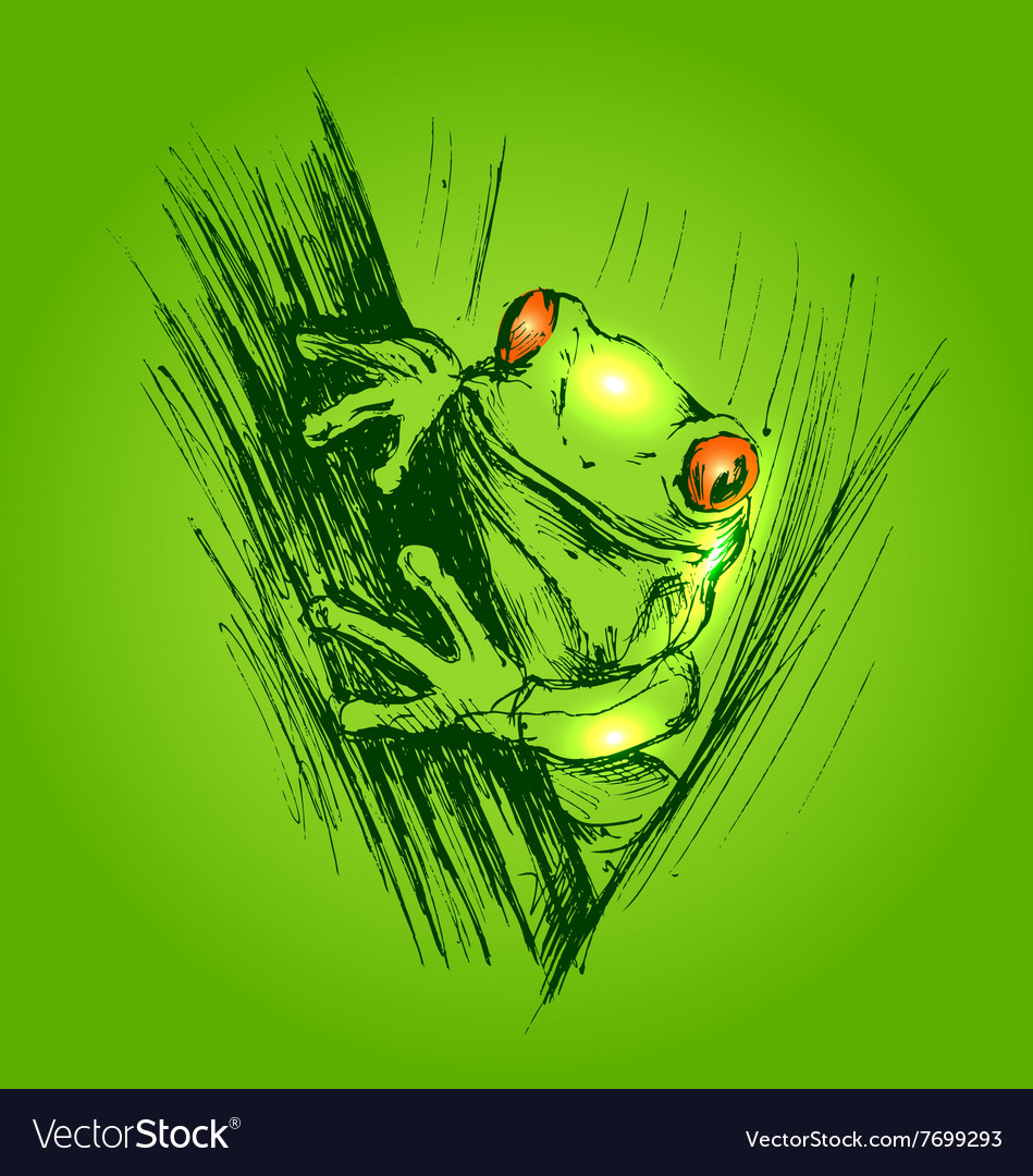 Colored hand sketch frogs
