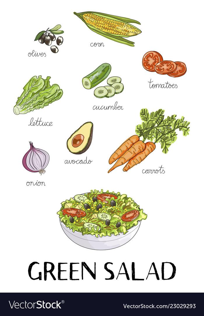 Hand Drawn Green Salad Ingredients Royalty Free Vector Image