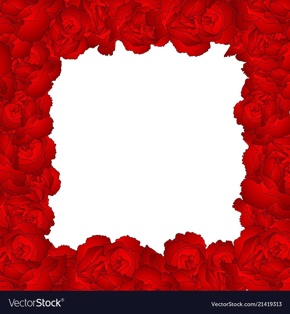 Dianthus caryophyllus - red carnation flower