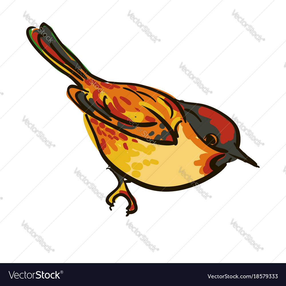 Drawing of the bird