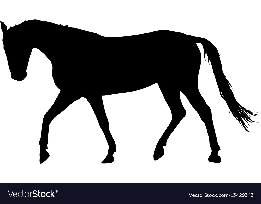 Silhouette of black mustang horse