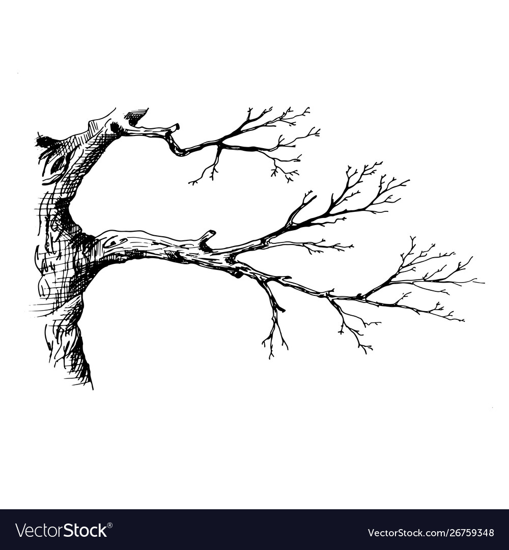 Tree Branch Hand Drawn Sketch Style Royalty Free Vector