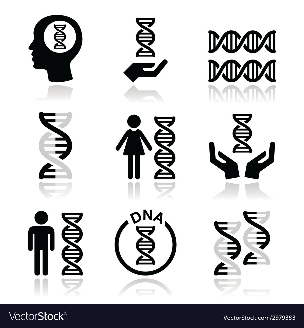 Human DNA genetics icons set vector image