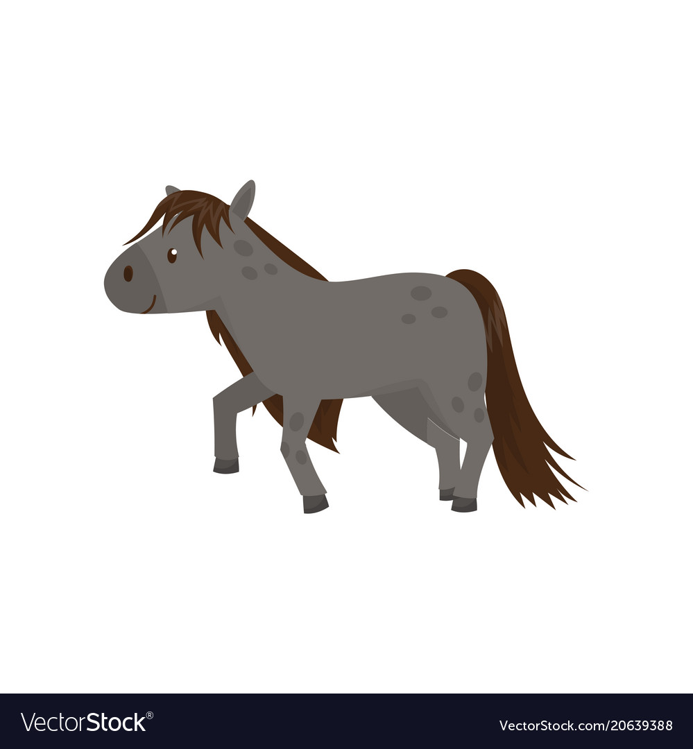 Beautiful grey horse pony on a vector image