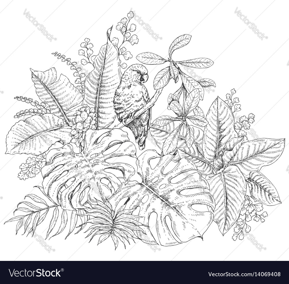 Tropical plants and sitting parrot vector image