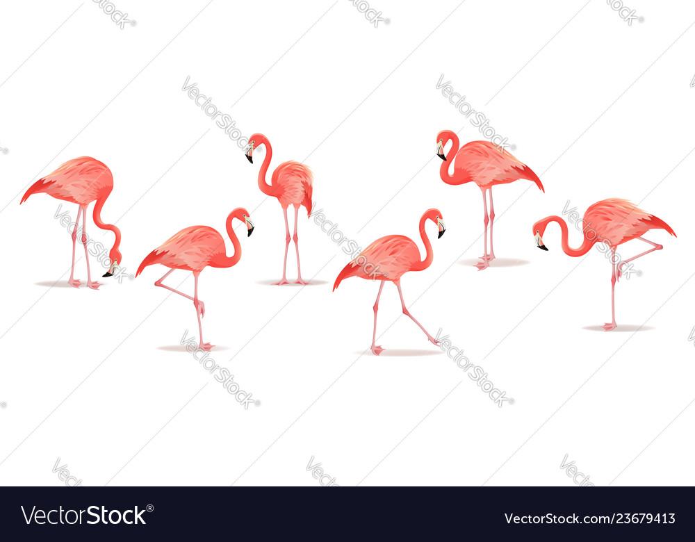 Set of exotic flamingos isolated on white