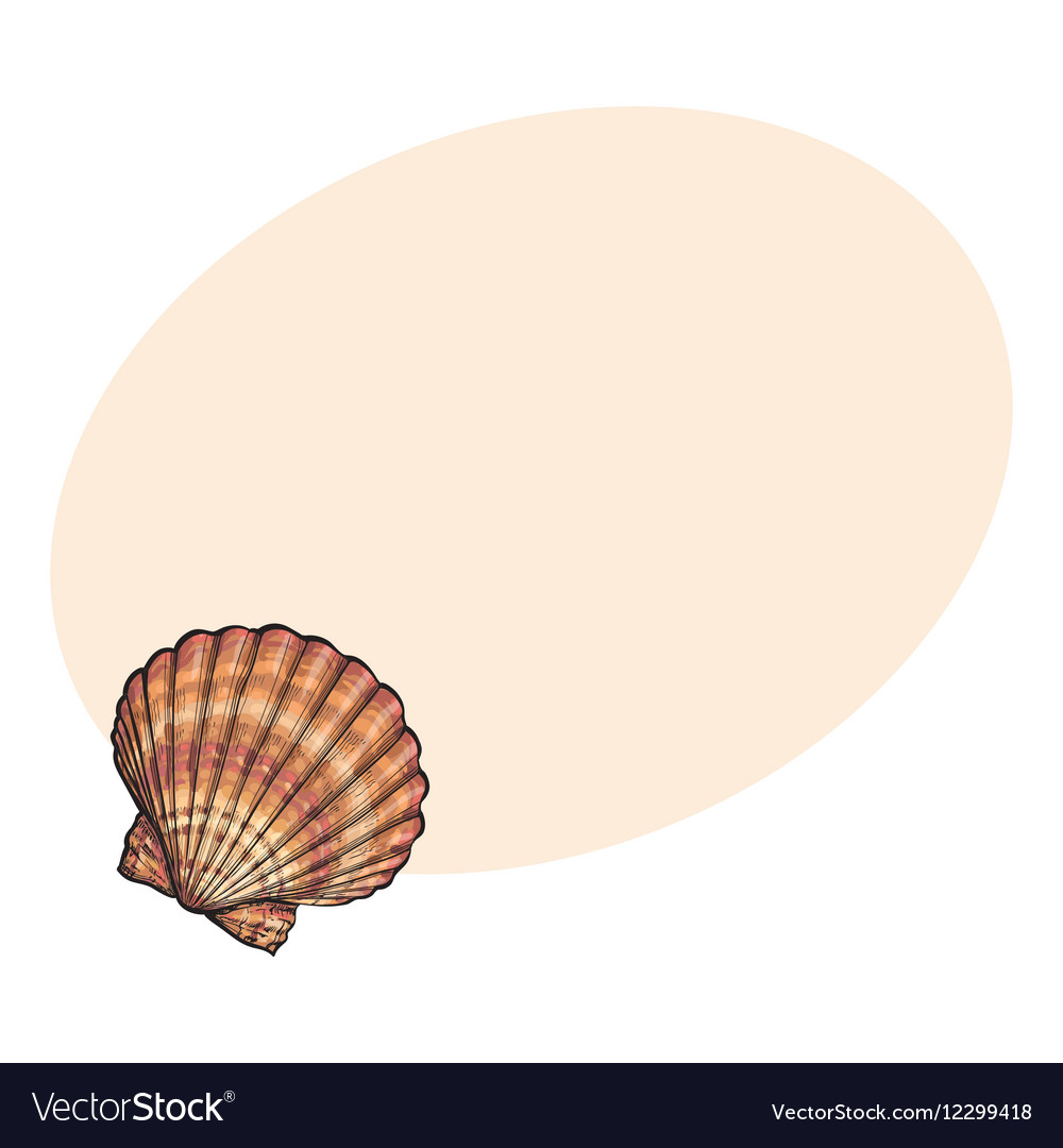 Colorful saltwater scallop sea shell isolated