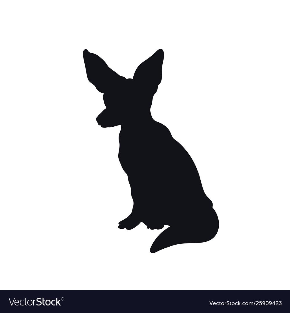 Black silhouette african fenech fox