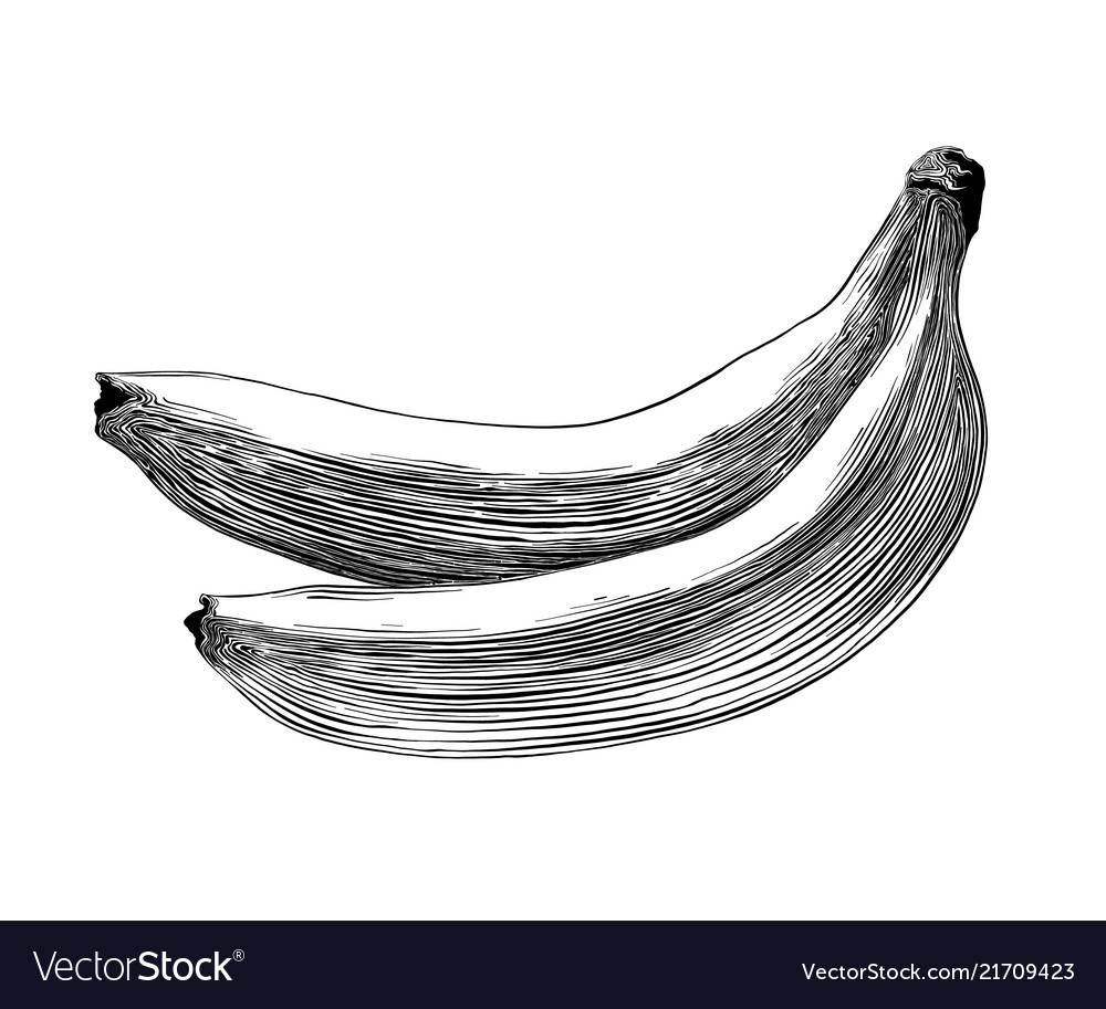 Hand drawn sketch of banana in black isolated on