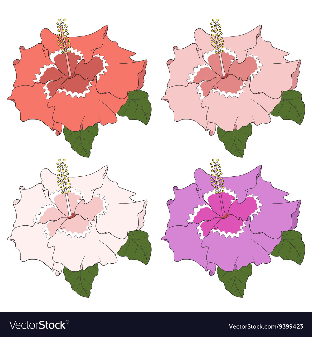 Hibiscus flower hand draw on white background vector image
