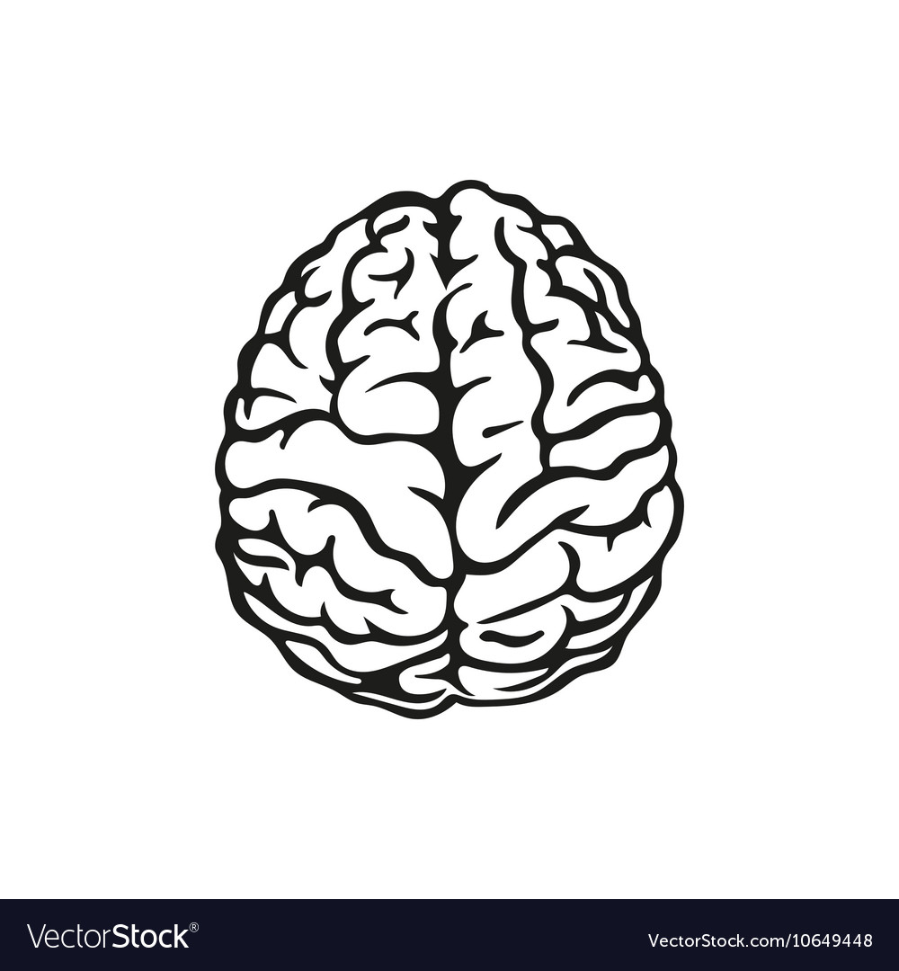 outline of human brain royalty free vector image rh vectorstock com brain vector free download brain vector graphic