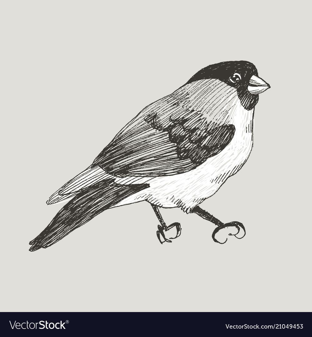 Graphic bullfinch hand drawn bird on retro