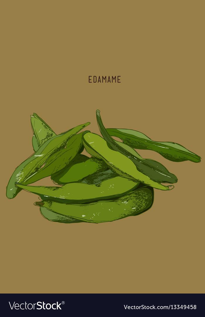 Hand drawn vegetable - edamamesoy beans vector image