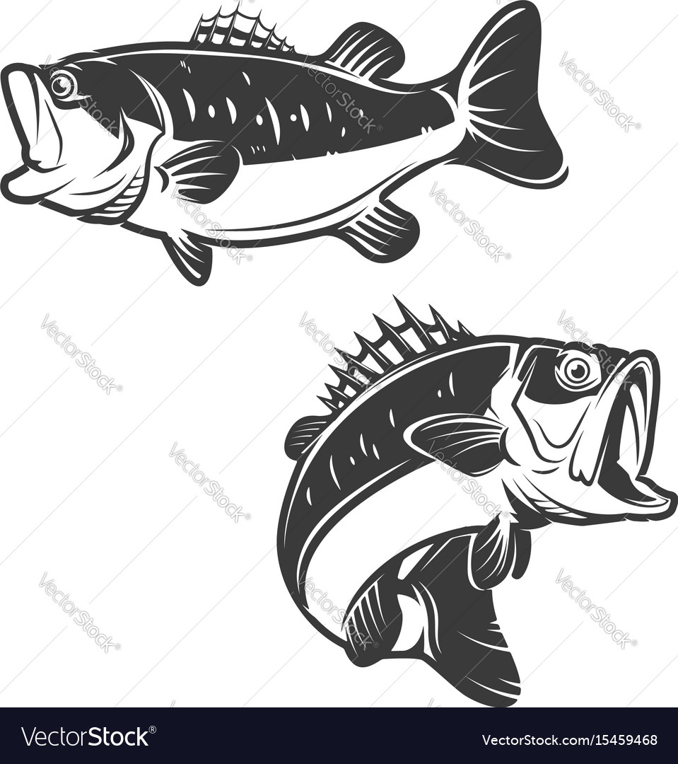 Set of bass fish icons isolated on white vector image
