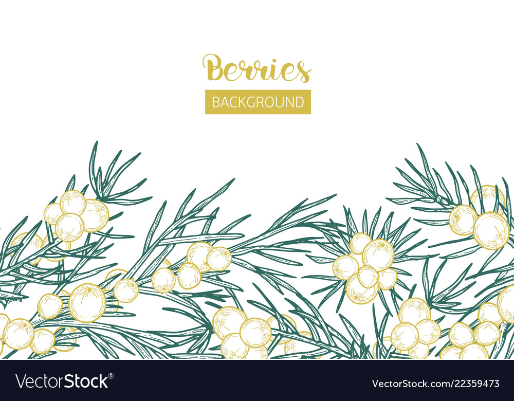 Elegant background with juniper sprigs and berries