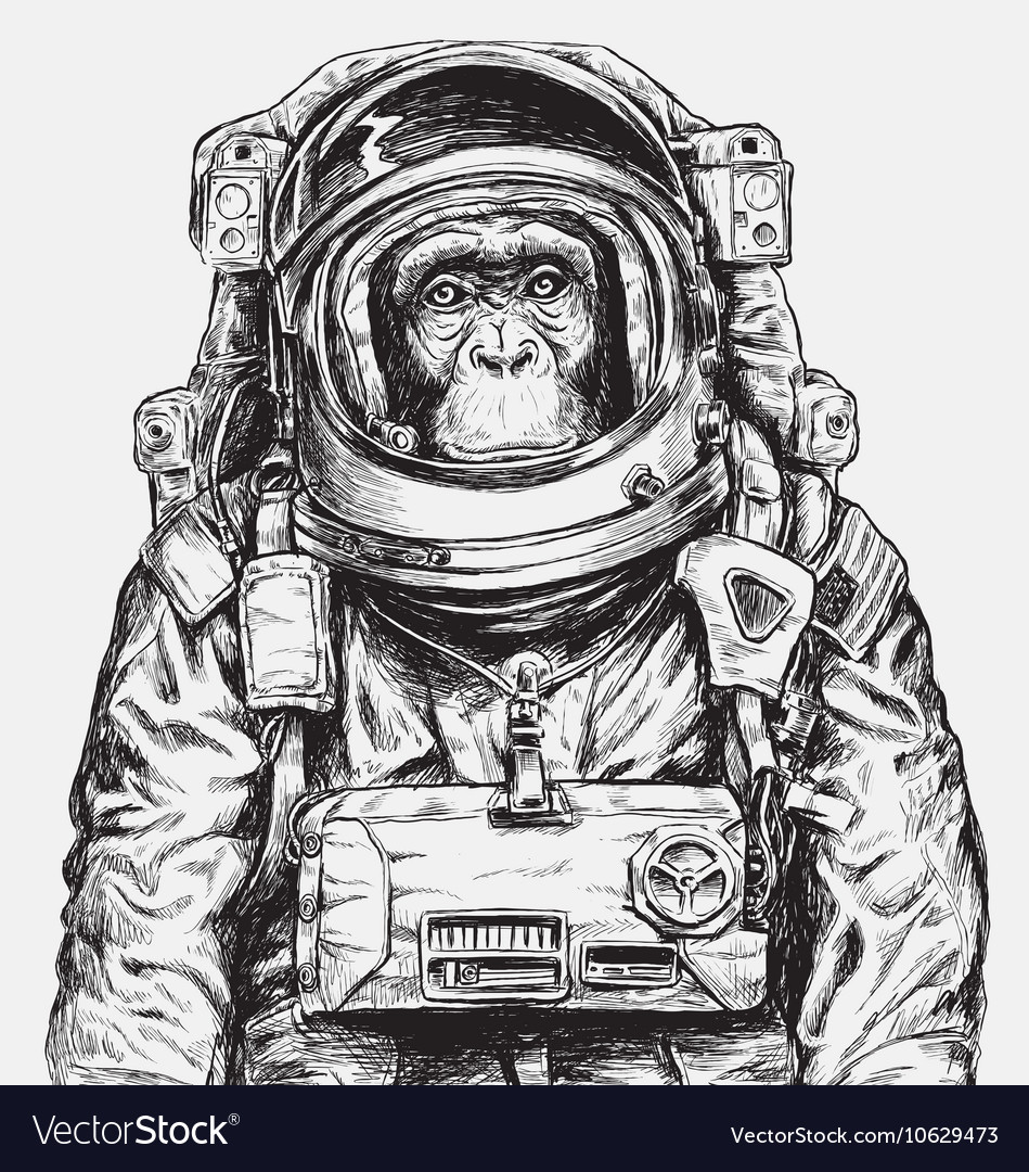 Hand Drawn Monkey Astronaut vector image