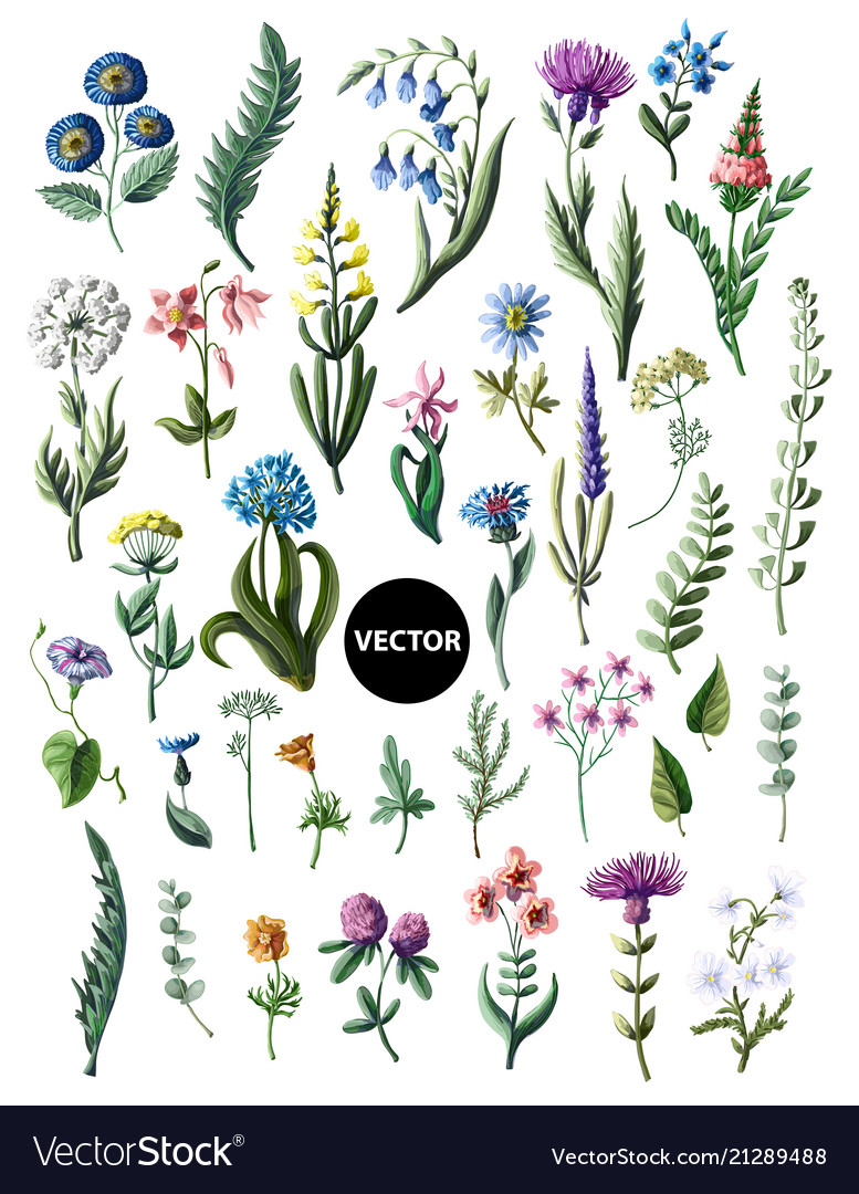 Big set of wild flowers isolated