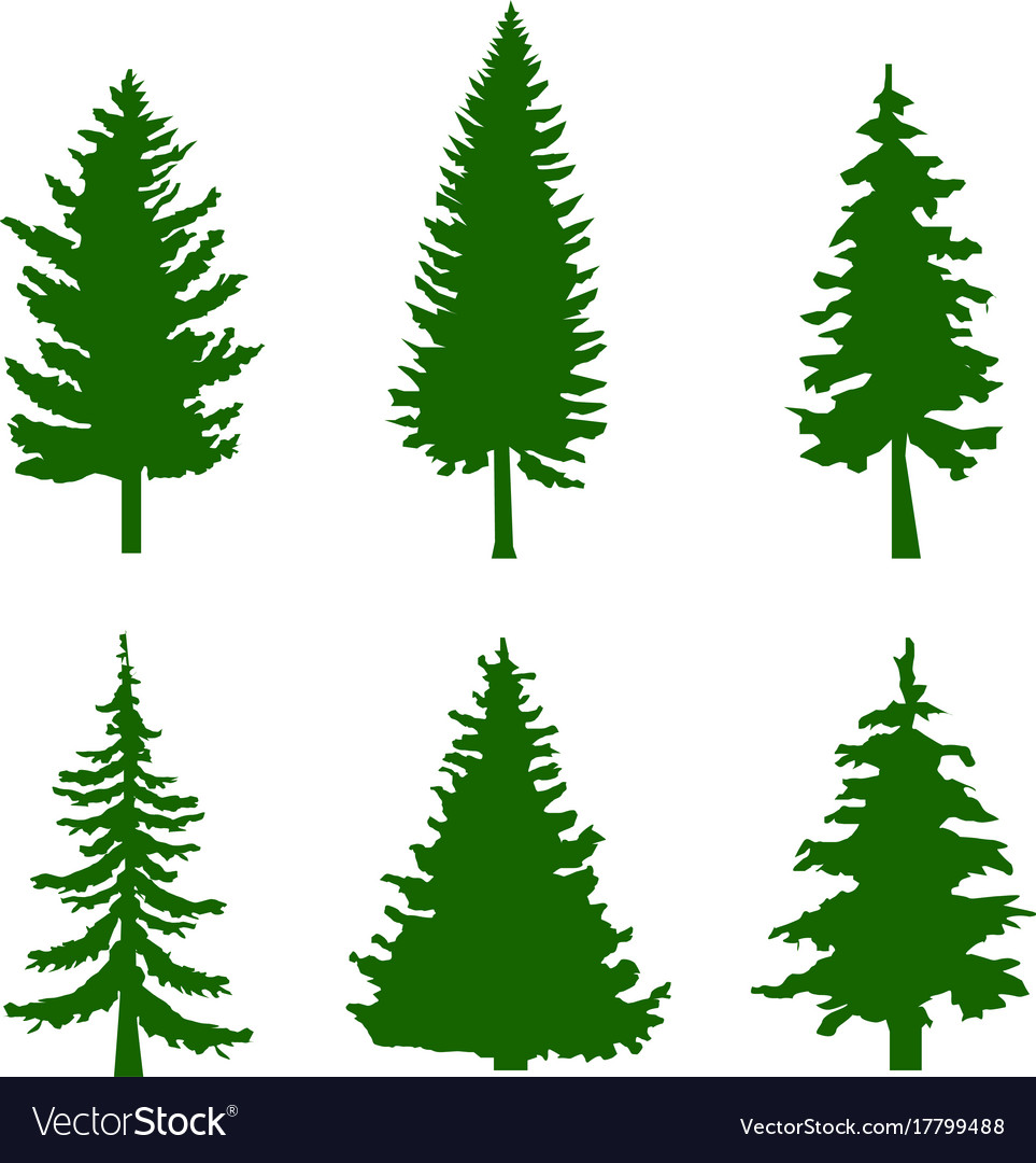 set of green silhouettes of pine trees on white vector image rh vectorstock com pine trees vector png vector pine trees