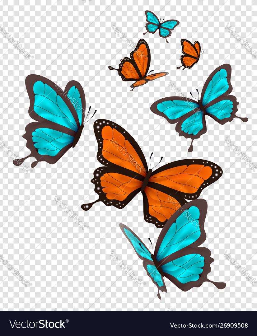 Isolated orange and blue butterfly set
