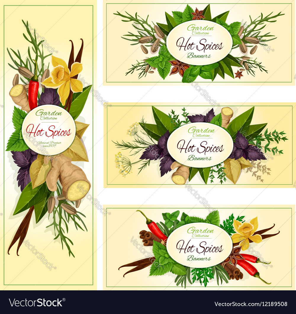 Spice herb and condiment banners for food design vector image