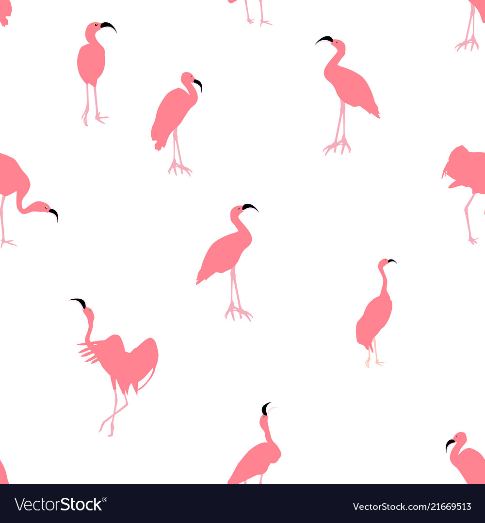 Colorful pink flamingo isolated on white