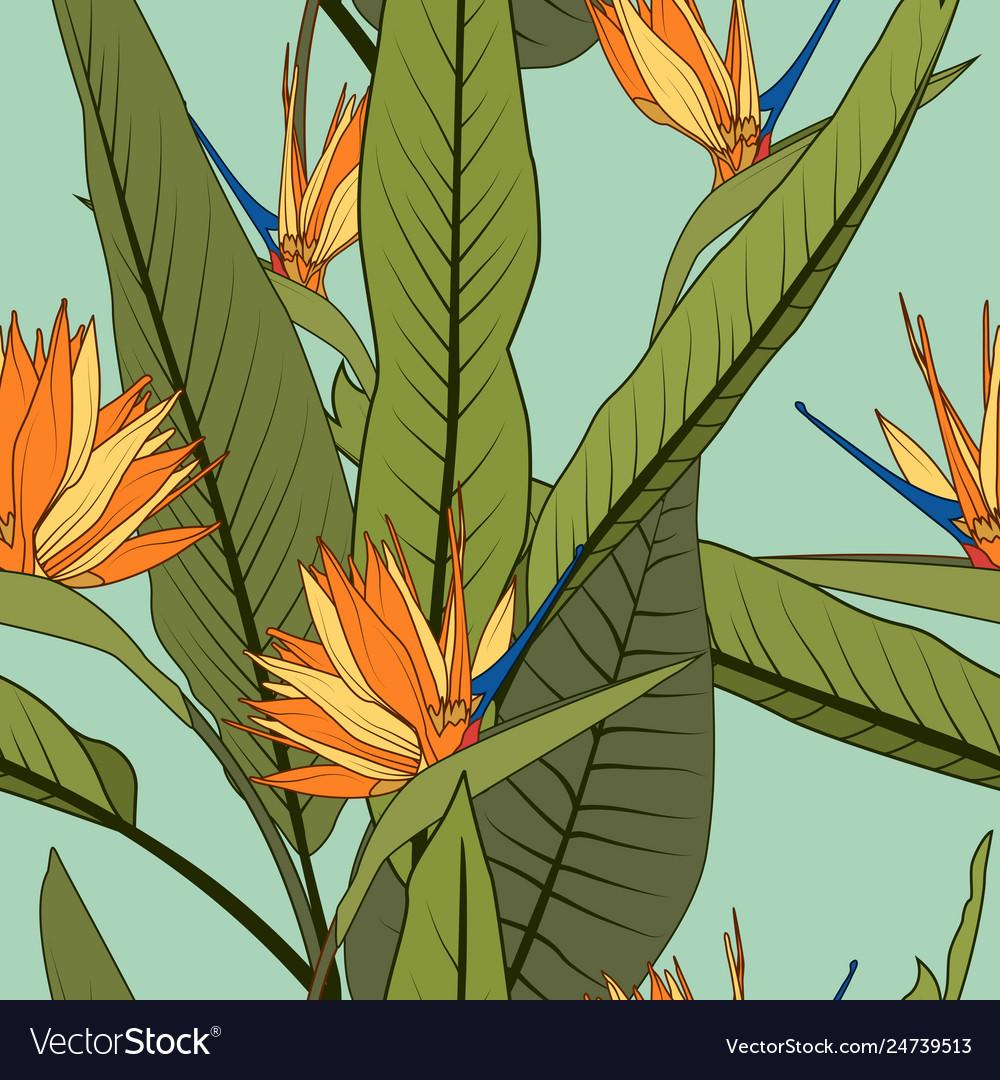 Exotic orange strelitzia bird paradise flowers