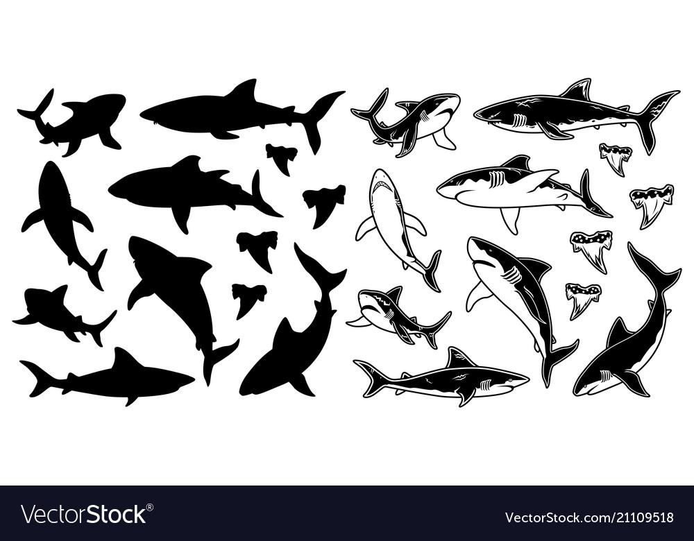Set of monochrome shark silhouettes sea
