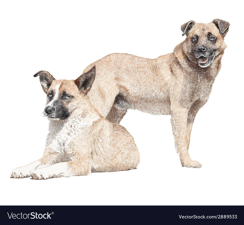 Drawing of two dogs vector image