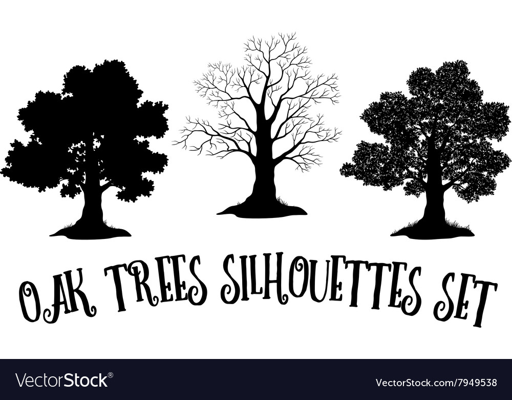 Oak Trees Black Silhouettes vector image