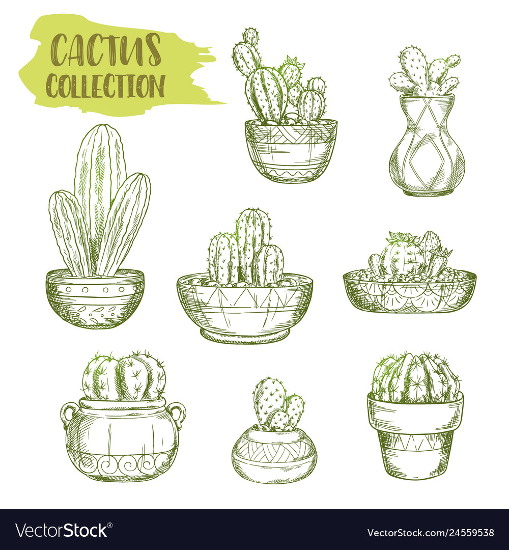 Sketches of mexican cactus plant