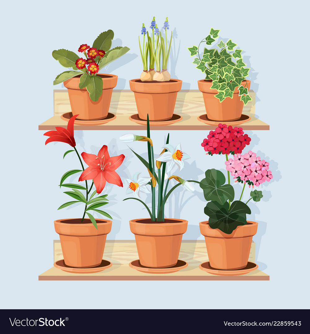 Flowers at shelves decorative tree plants grow