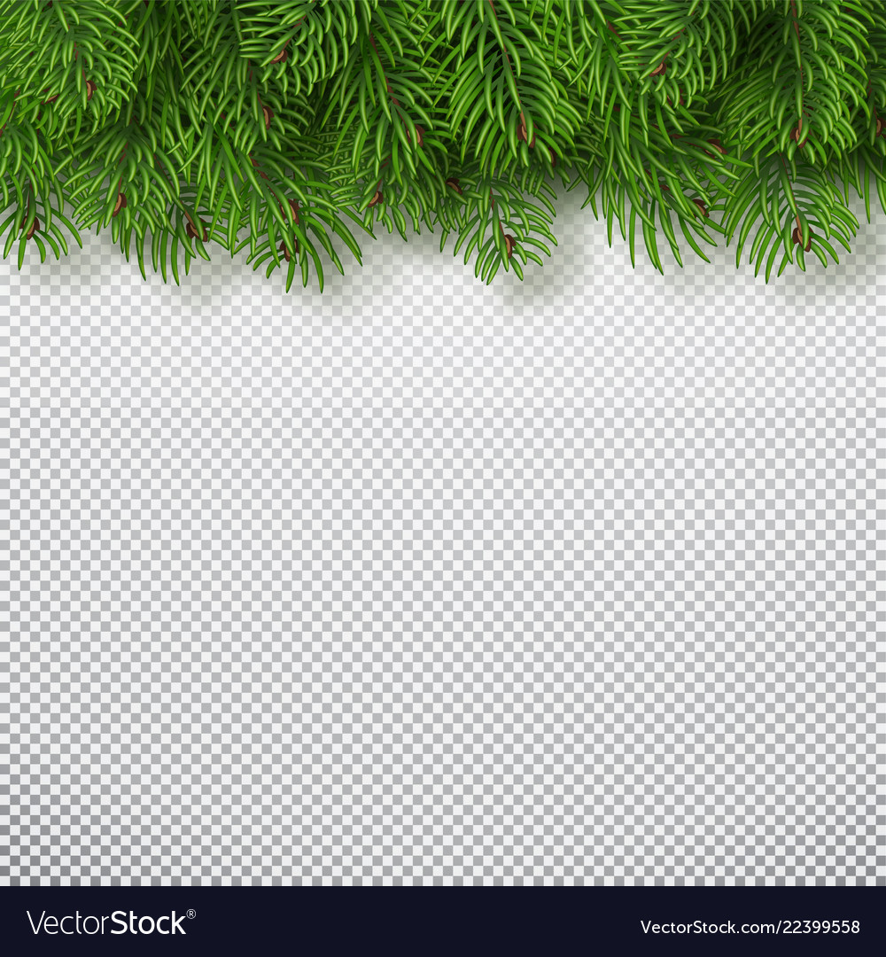 Christmas tree branches background christmas and