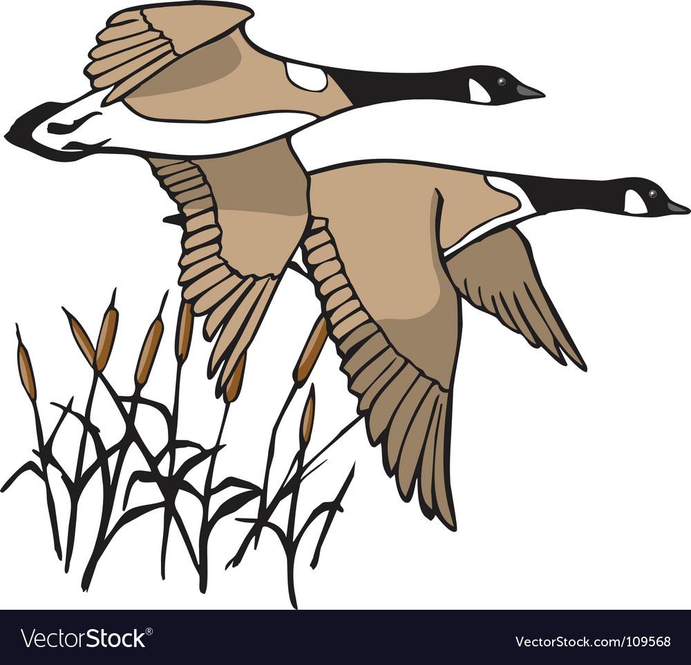 Geese in flight vector image