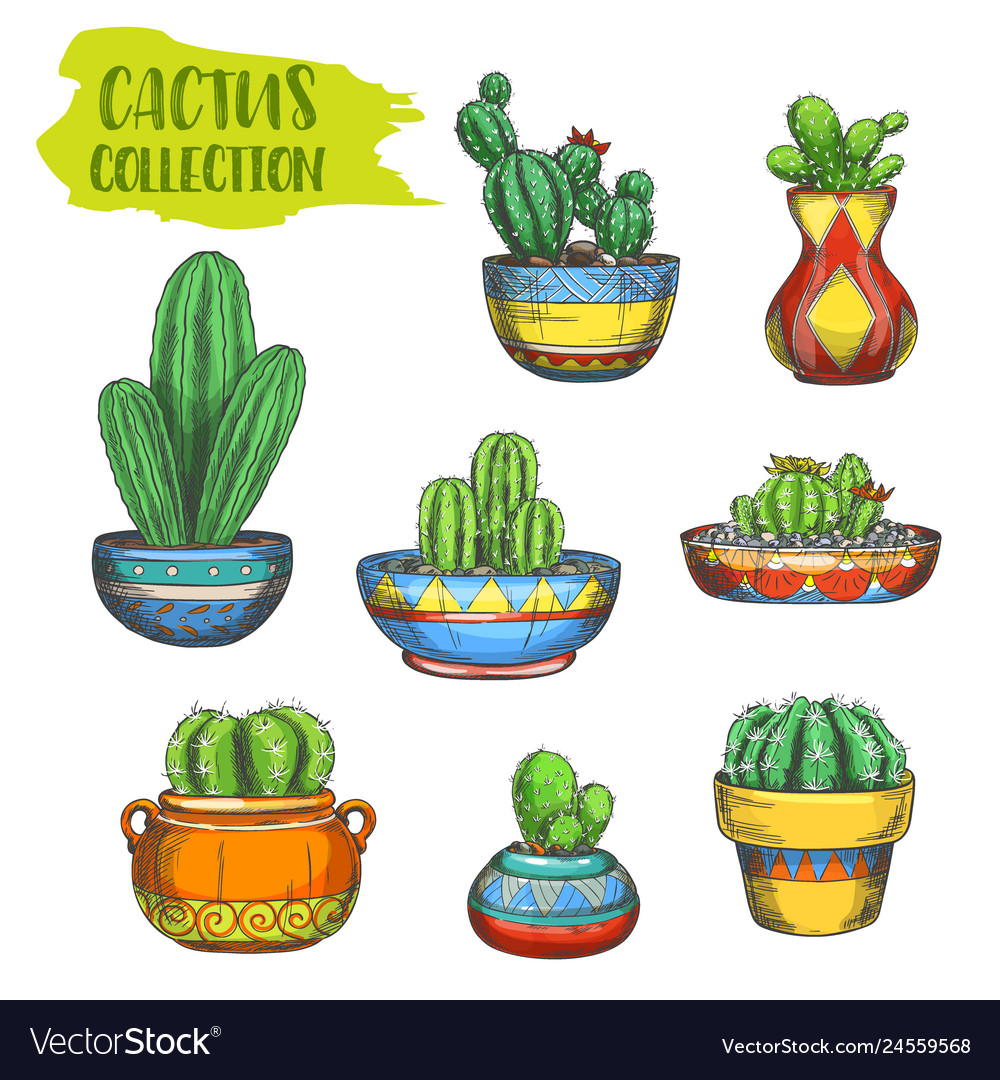 Set isolated cactus in pot cactaceae in plate