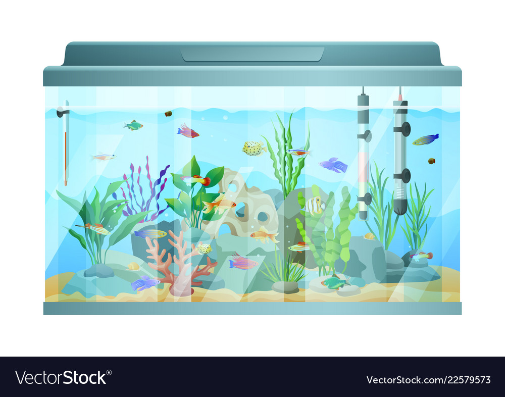 Fish swimming among stones and seaweed in aquarium