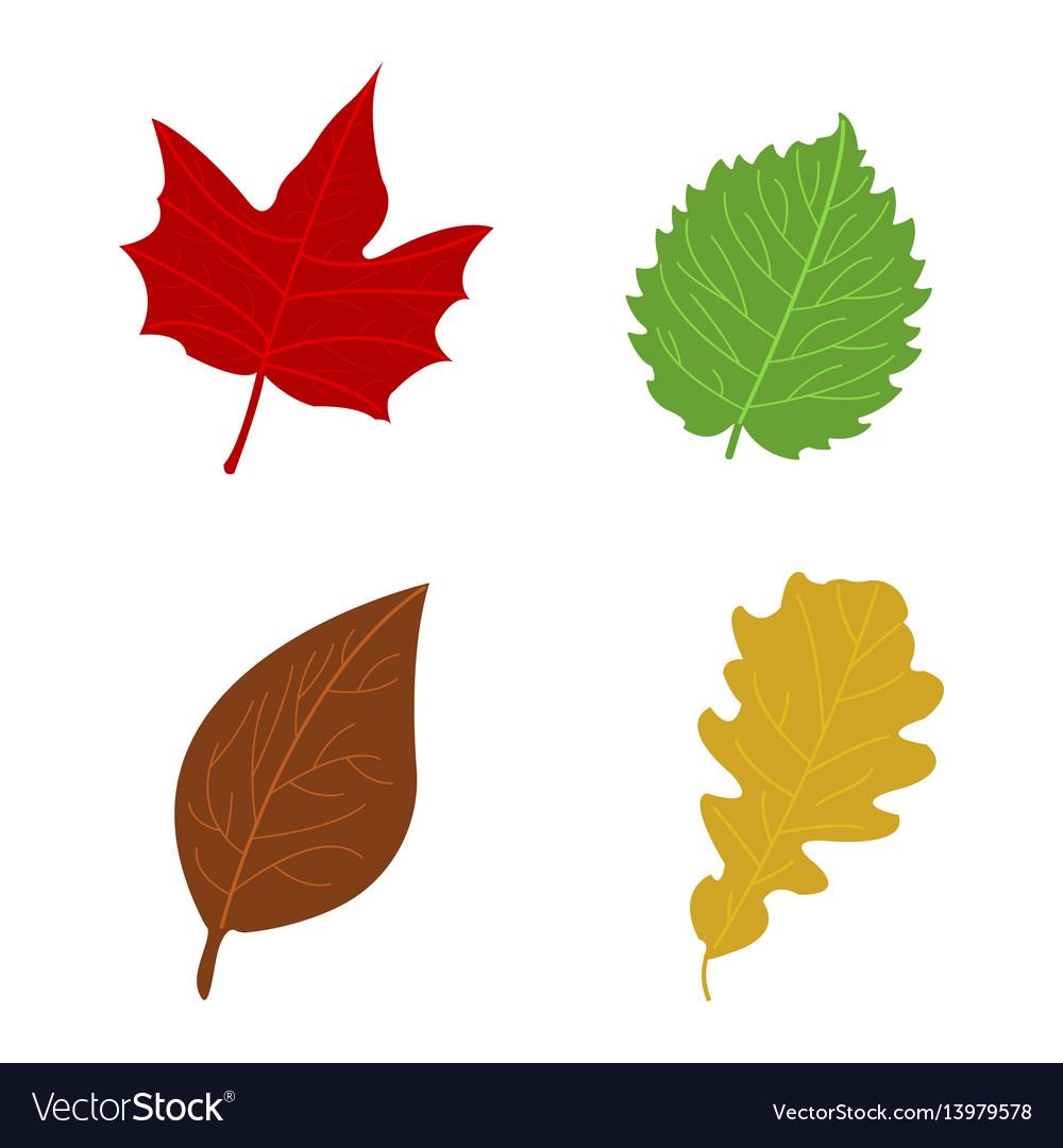 cartoon flat autumn leaves royalty free vector image rh vectorstock com cartoon leaves images cartoon leaves autumn