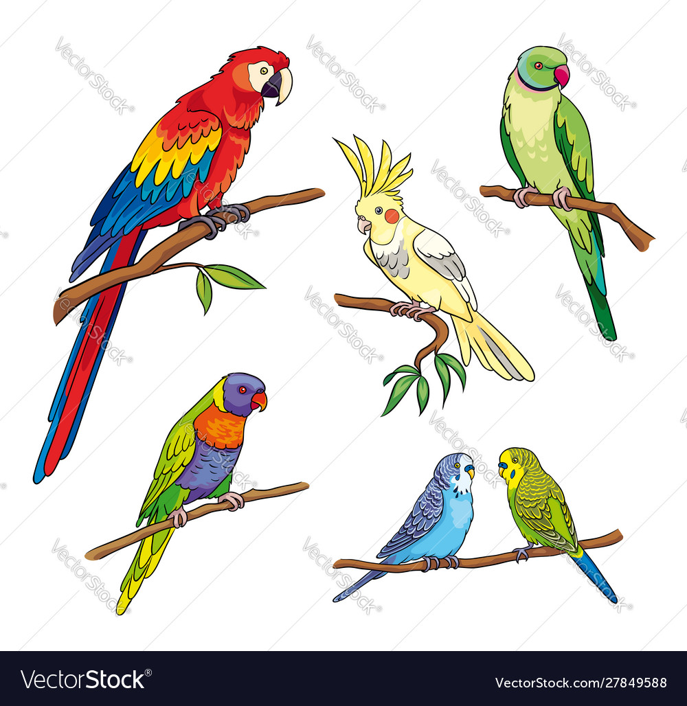 Different parrots vector
